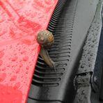 Umweg einer Schnecke über mein Auto........!