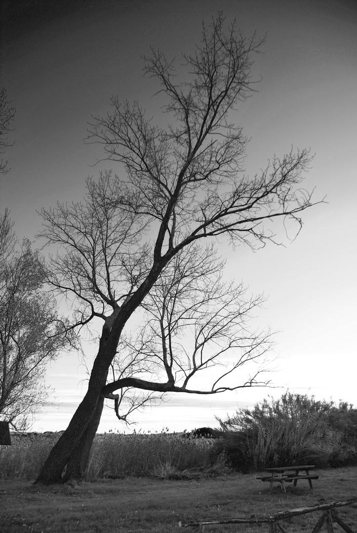 ...un albero bellissimo...