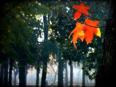 Un altro autunno caldo