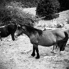 Un altro cavallo