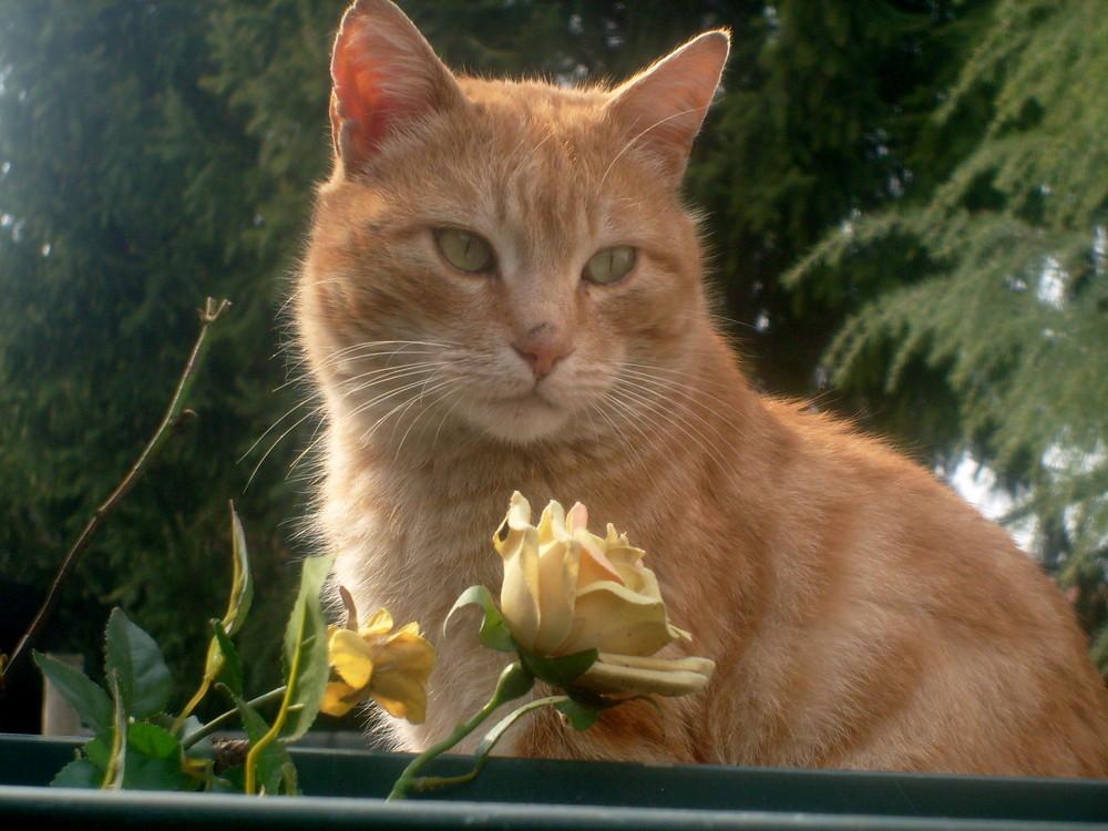 un amore tra le rose FILIPPO