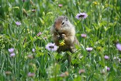 un amour d'écureuil