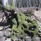 Un arbre bien tortueux !