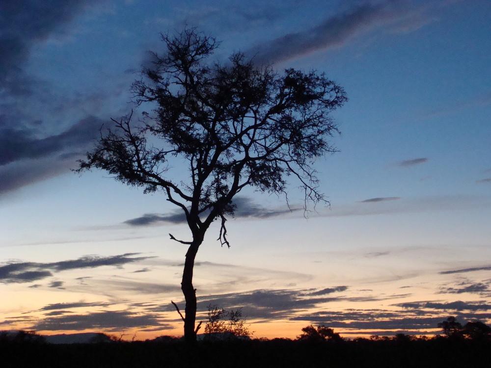 Un arbre dans la nuit
