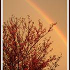 Un arcoiris en un cálido atardecer