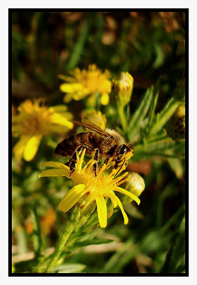 Un bagno nel polline