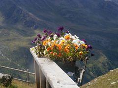 Un bel mazzo di fiori in omaggio ai monti .