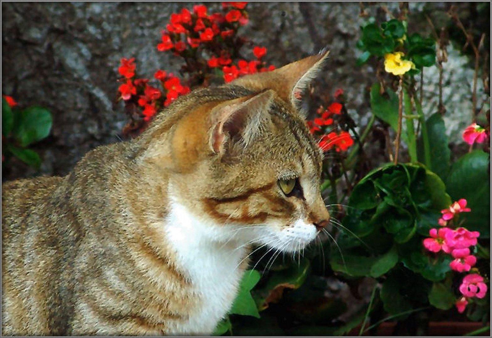 Un bello gattino tra fiori