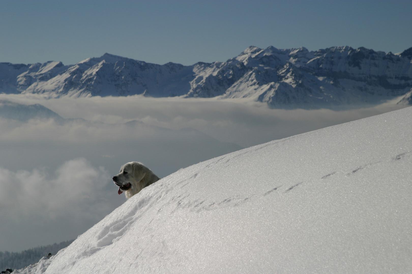 un berger de podhale perdu dans les alpes...