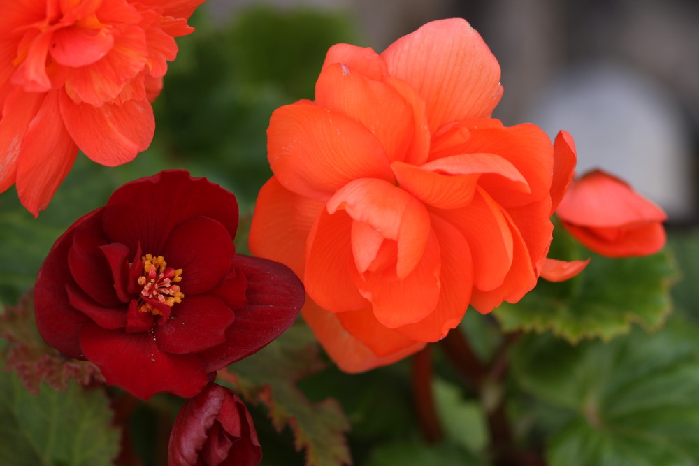 un bouquet pour fleurpassion