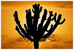 Un cactus en frente de la Salida del sol
