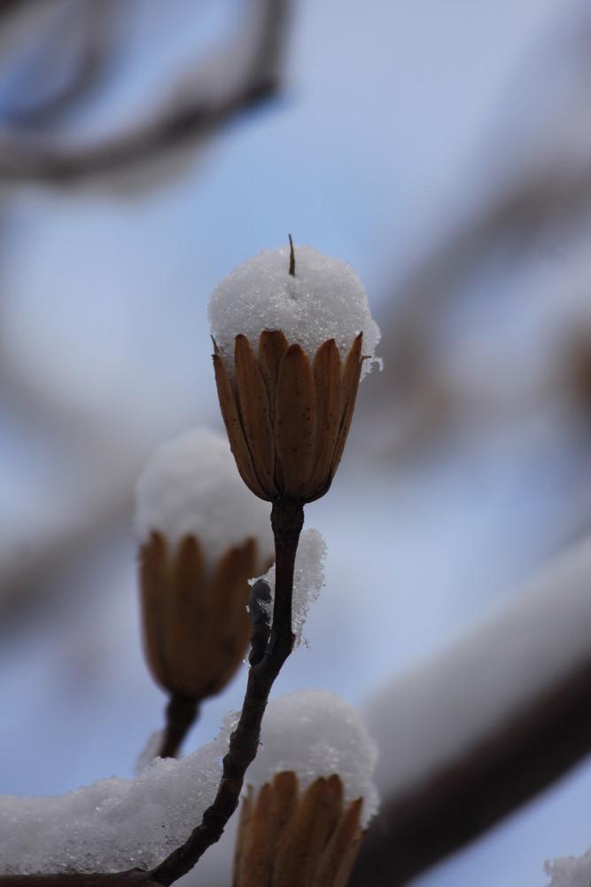 un calice di neve