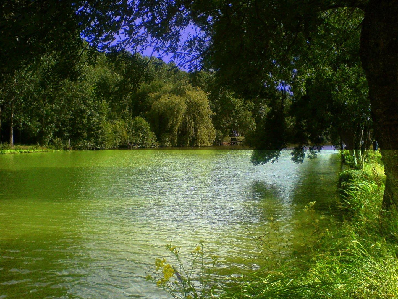 Un canal verdoyant..!!