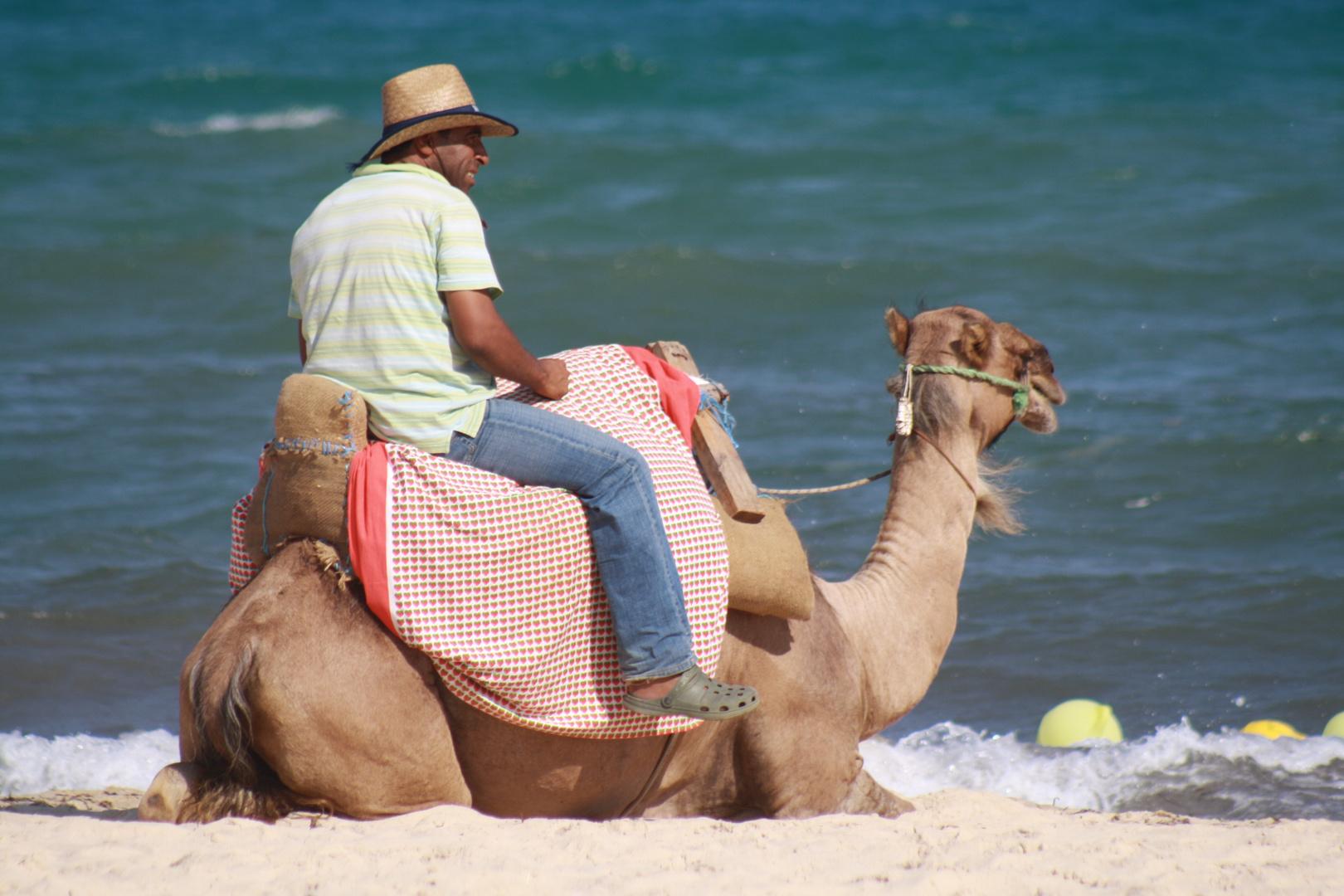 un chameau sur la plage d'Hhammamet  !