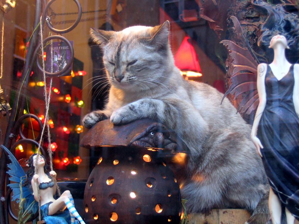 un chat à lyon