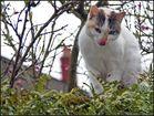 Un chat coopératif... Ho la belle langue !