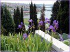 Un cimetère en fleur / Ein blühender Friedhof