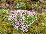 Un Coeur de fleurs pour ma Maman endormie loin de moi...