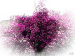 Un corazón de flores