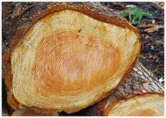 un cuore di legno.....