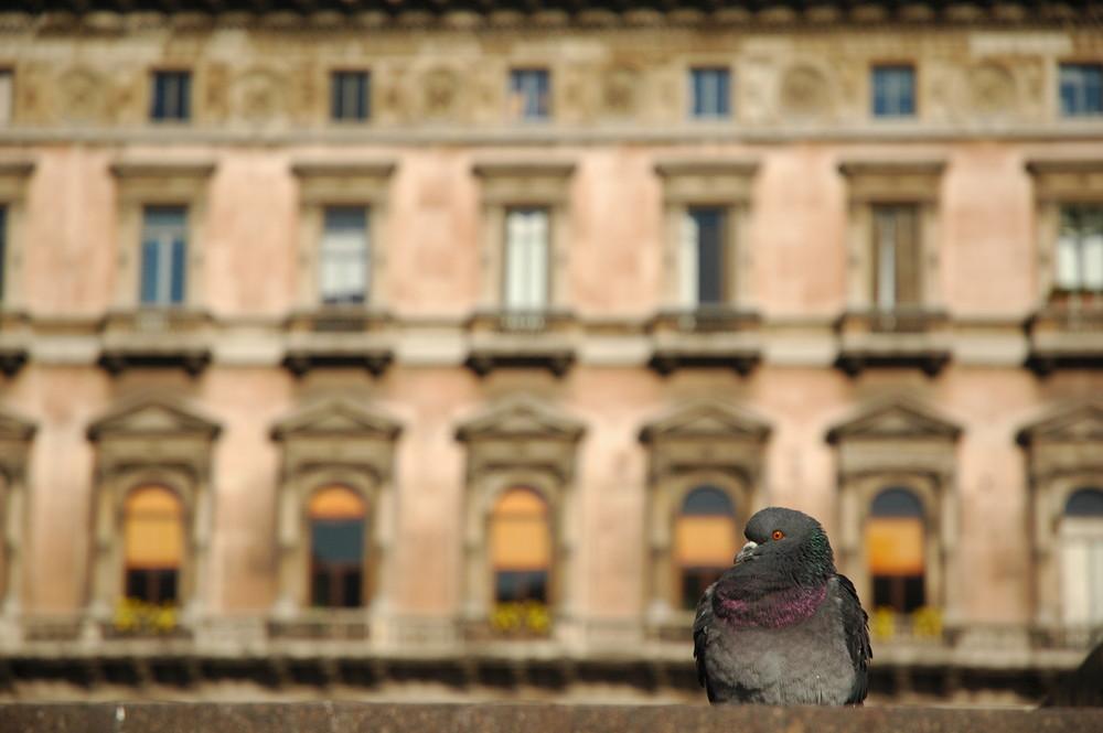Un curioso in p.za Duomo
