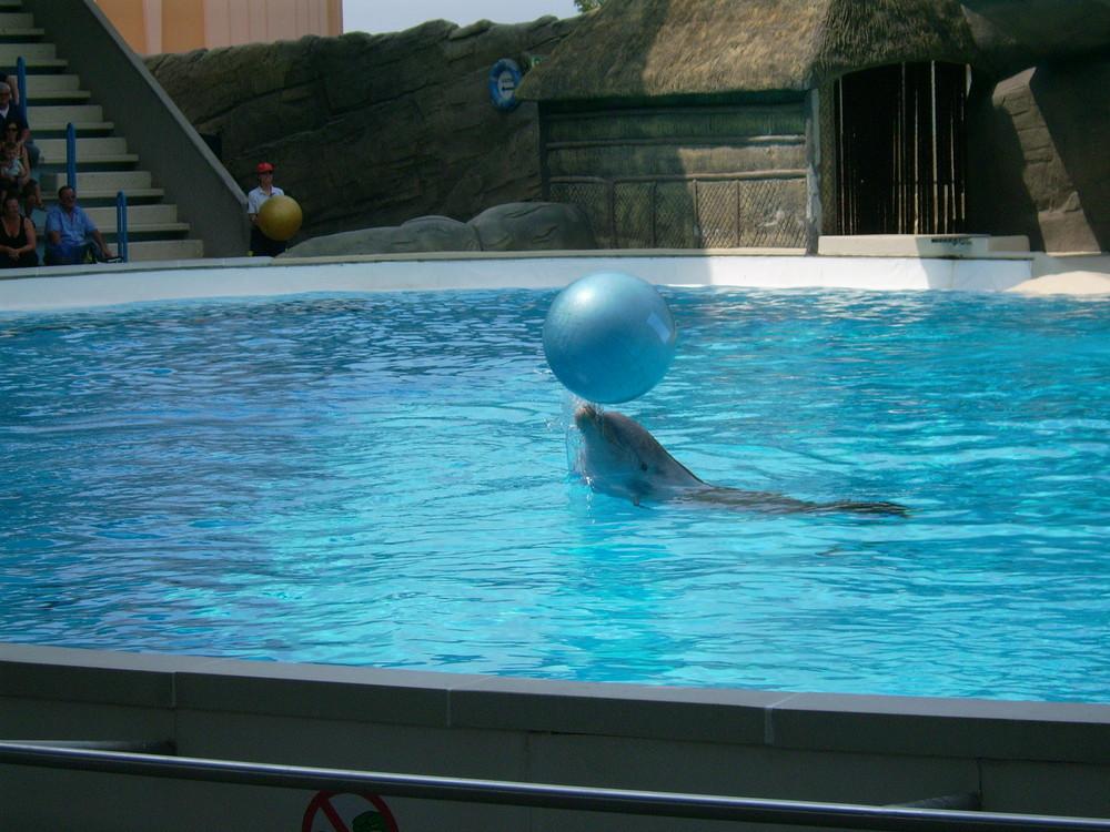 Un delfino a Gardaland 2 : )