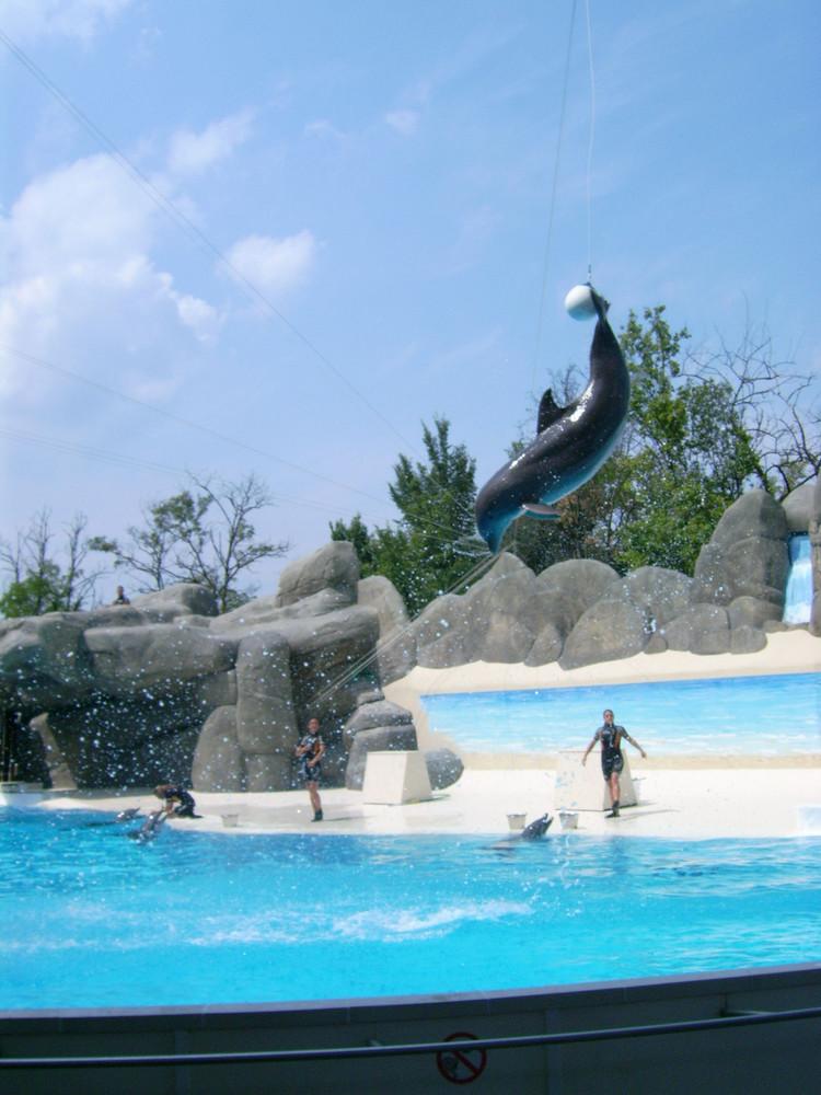 Un delfino a Gardaland : )