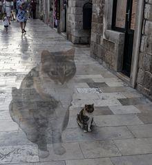 Un día de gatos - I