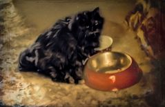 Un día de gatos - III