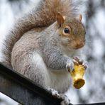 Un écureuil trognon