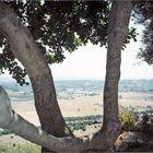 Un fenêtre naturelle... (2004)
