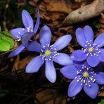Un fiore....
