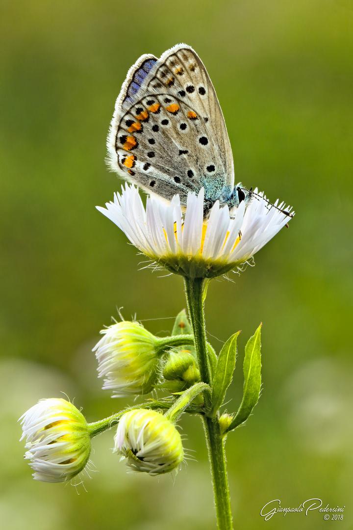 Un fiore da gustare