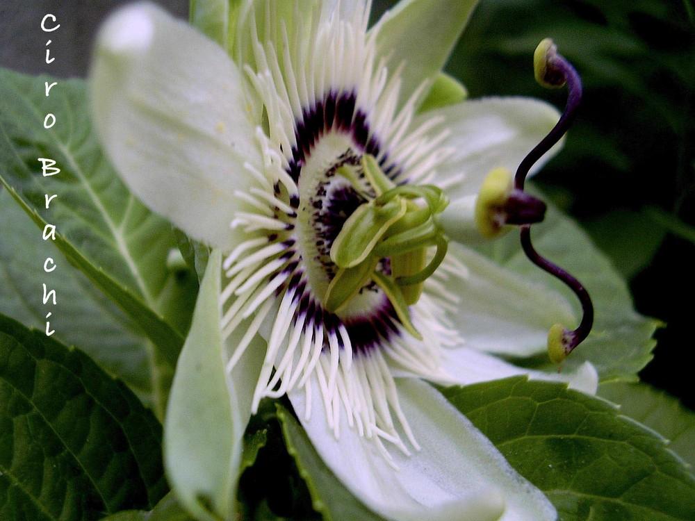 Un fiore ...... da molto vicino