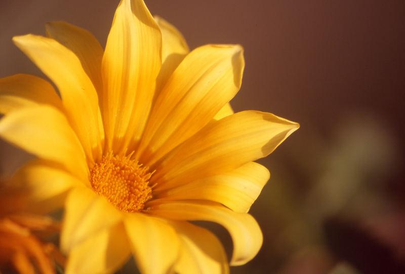 un fiore di pomeriggio
