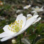 un fiore non fa primavere, ma molti ....