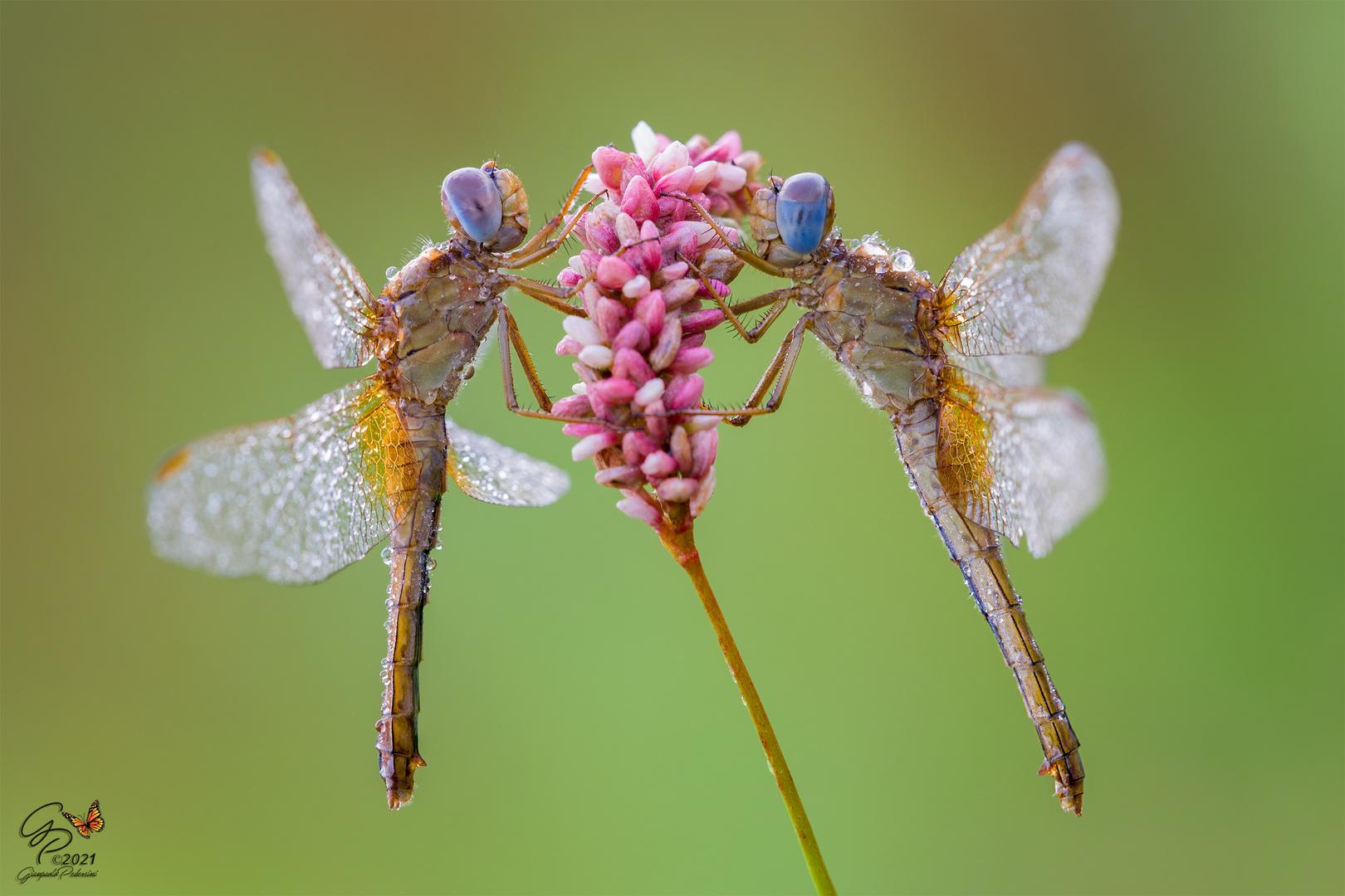 Un fiore per due