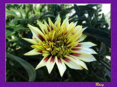 Un Fiore ....per Voi