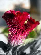 Un fiore speciale