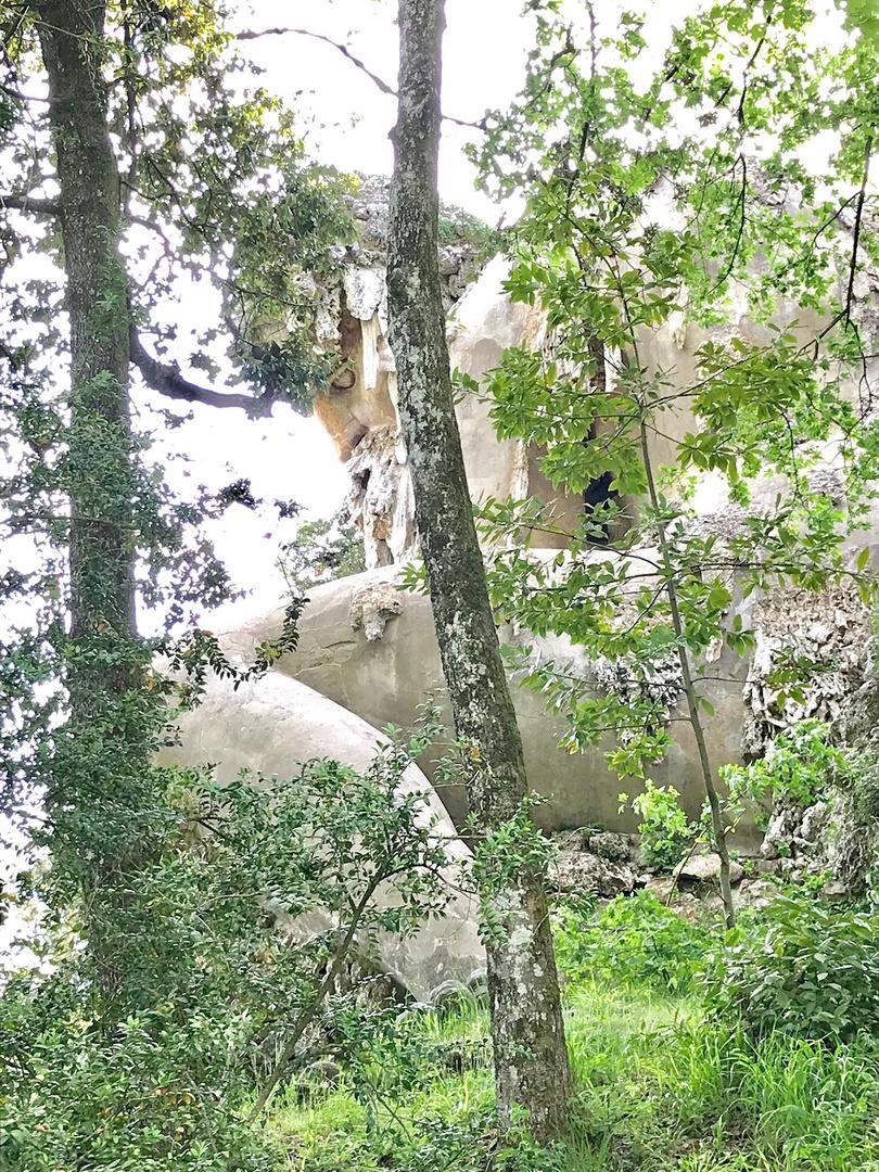 Un gigante tra gli alberi