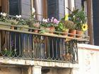 Un girasol en el balcon