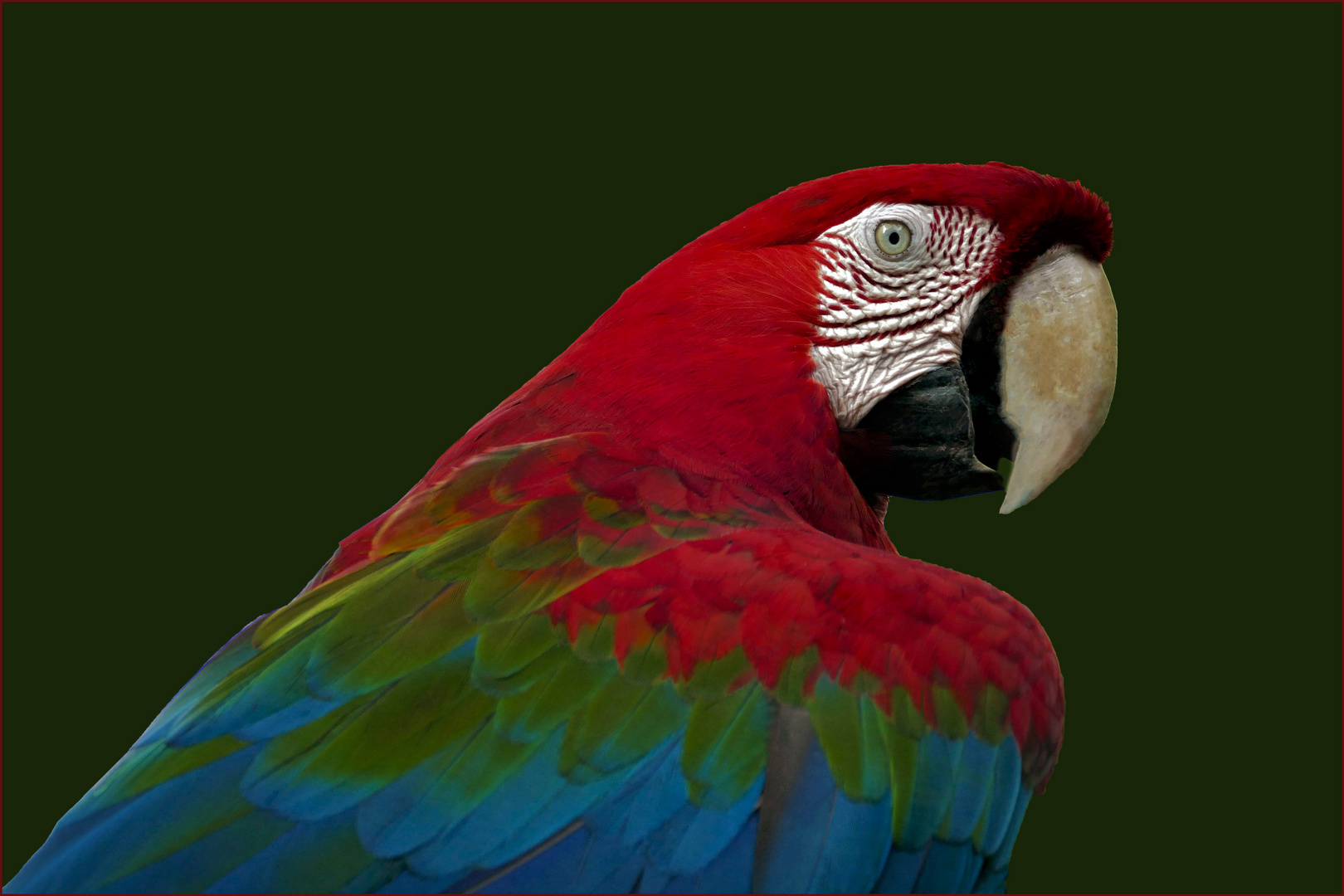un grand bavard multicolore......
