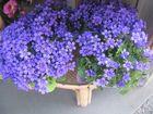 Un grazioso bouquet