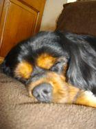 Un gros dormeur!