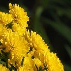 Un jaune de saison