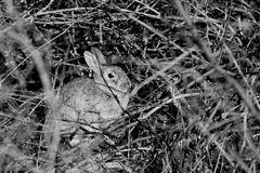 un lapin en automne