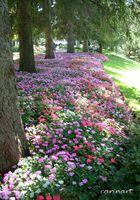 Un magnifique parc typique