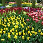 Un mar de colorido entre los tulipanes