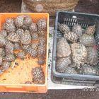 Un marché au Maroc