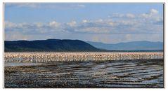 un mare di uccelli al lago 2